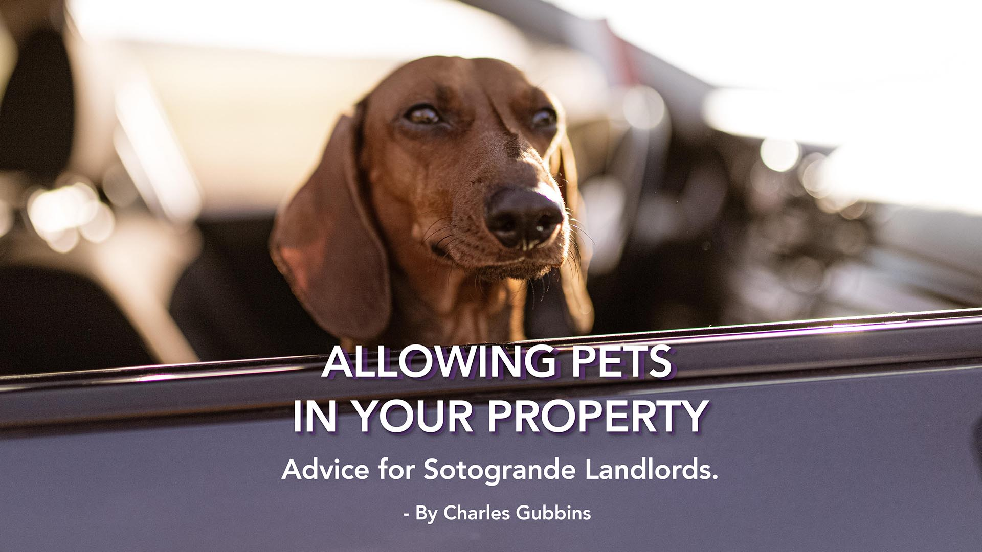 Allowing Pets in your Sotogrande Property: Advice for LANDLORDS.