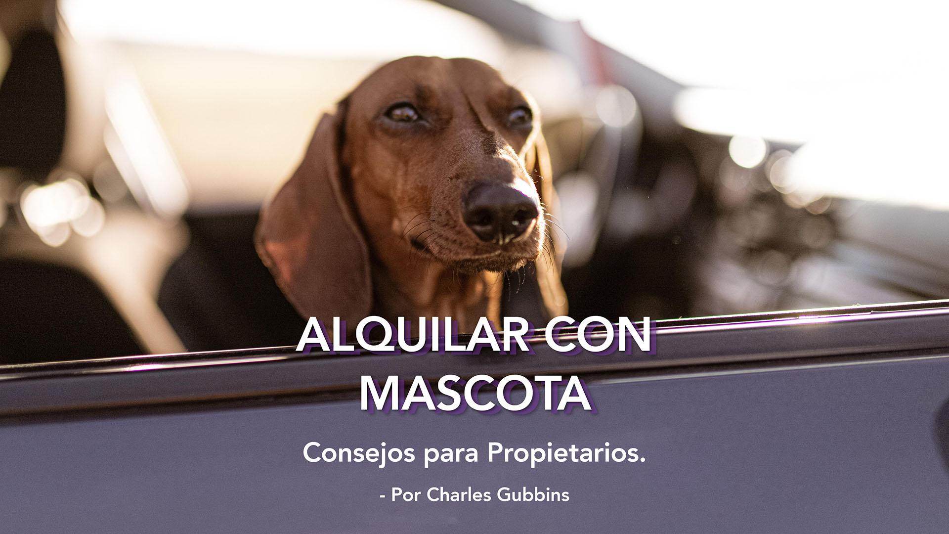 Permitir mascotas en su propiedad de Sotogrande: Consejos para PROPIETARIOS.